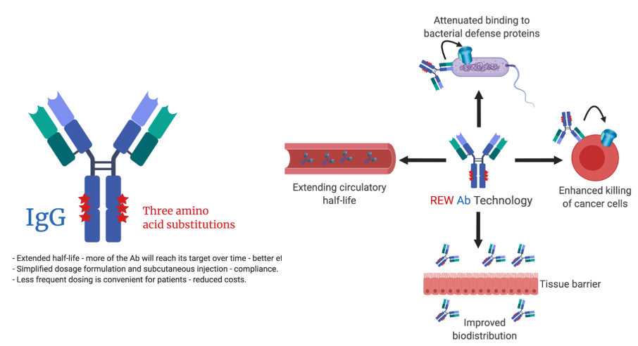 A versatile improved antibody Fc technology platform