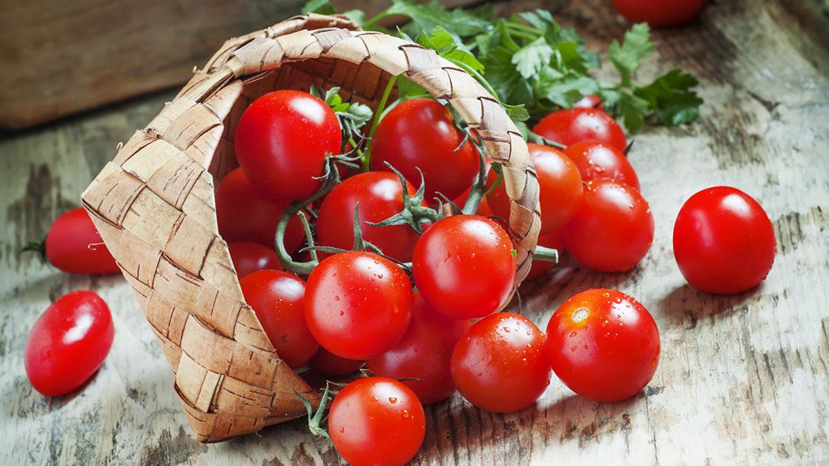 Det britiske selskapet Provexis kjøper rettigheter til tomatteknologi